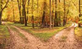 Roads Diverging